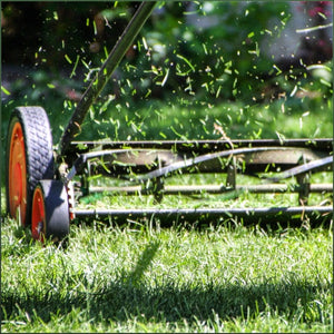push mower cutting grass