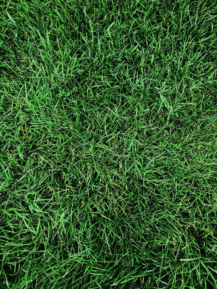 grass from overhead shot