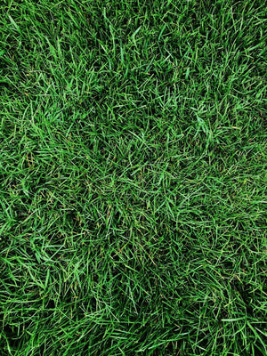 DIY Fertilizer: Customize Your Lawn Care