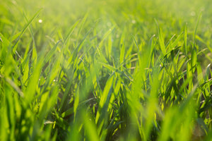 5 Steps to Bring Your Lawn Back to Life