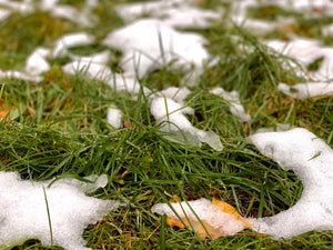 snow melting on lawn and grass
