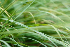 grass zoomed in and up close