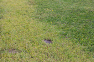 Dead or Dry? What You Need to Know About Your Lawn's Health