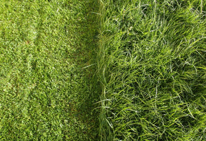Tips, Tricks, & Common Mistakes in Treating Warm Season Grass
