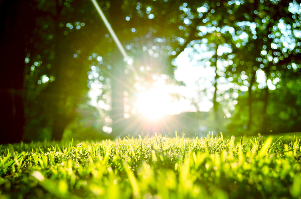 lawn with grass and sun shining