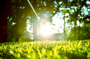 Five Tips for Proper Lawn Care