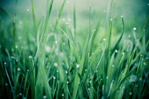 green lawn care with lawn with droplets