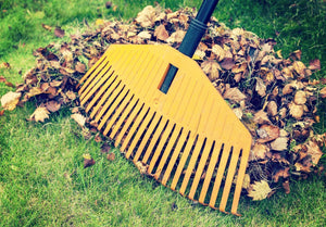 fall lawn care with someone raking leaves over grass