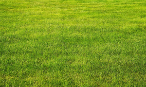 Winter Lawn Care for Warm-Season Grass