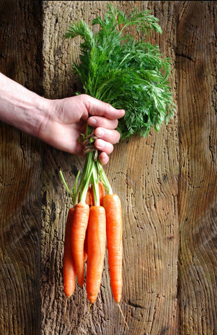 Hand holding bunch of carrots by the stems