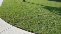 Freshly cut grass with sidewalk