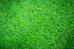 Grassy field up close