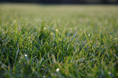 Green grass with dew close up