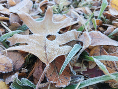 Winter frost on leaves and grass
