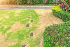 Lawn with lots of patches and brown spots