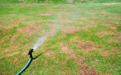Irrigation system watering green lawn with brown spots