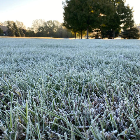 Frosted Sod Grass in the Morning