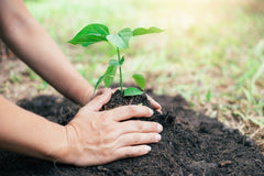 Person planting in dirt