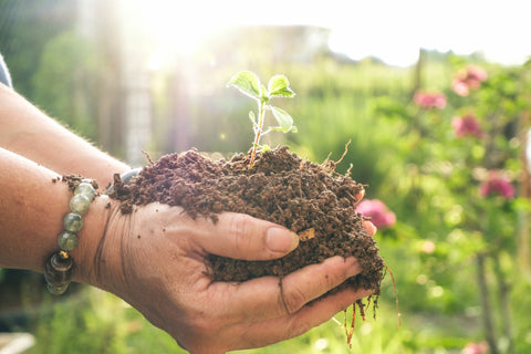 Two hands holding pile of soil with plant sticking out