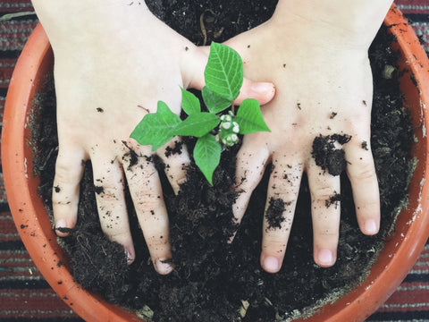 Hands patting down soil in plant pot
