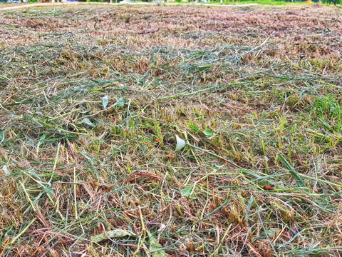 Dead brownish yellow grass patch