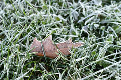 heavy frost on grass and a leaf