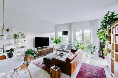 Living room in house with indoor plants scattered