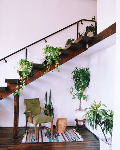 Indoor plants on a staircase