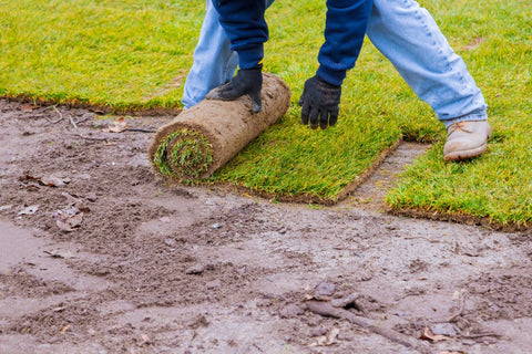 Man with Gloves Installing Sod Grass
