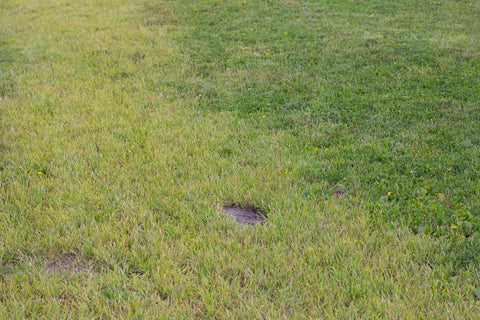 Bad Lawn With Bare Patches