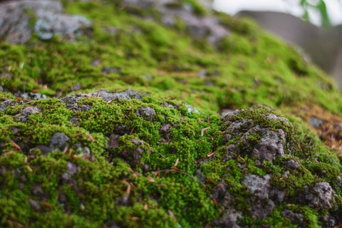 Moss covered rocks.