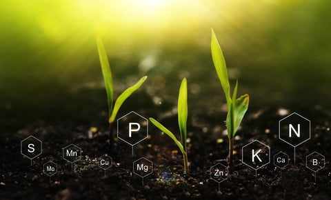 Young plants with different type of fertilizer formulas underneath