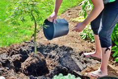 person planting tree in soil