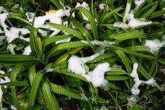 plants and grass with fresh snow
