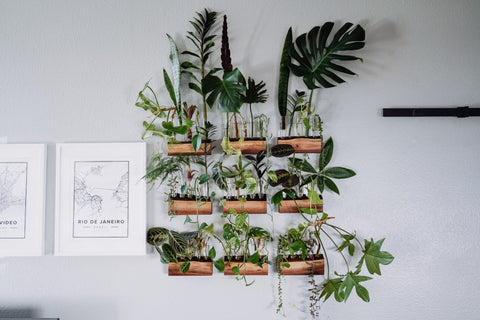 Wooden pots hanging from wall filled with ferns and other plants