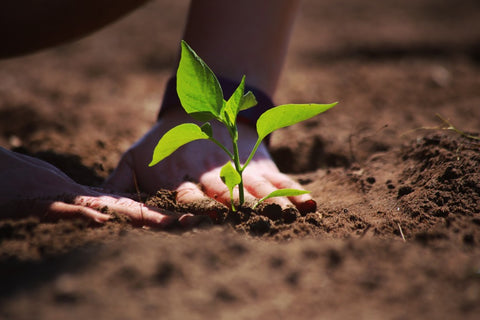 Person planting something in soil.