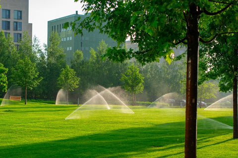 Green grass field in park watered by multiple sprinklers