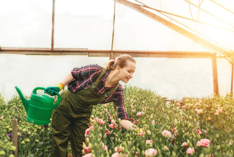 Woman fertilizing vegetable garden inside a green house while holding watering can