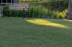 Bench in shade on grass
