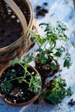 Clay pots and soil