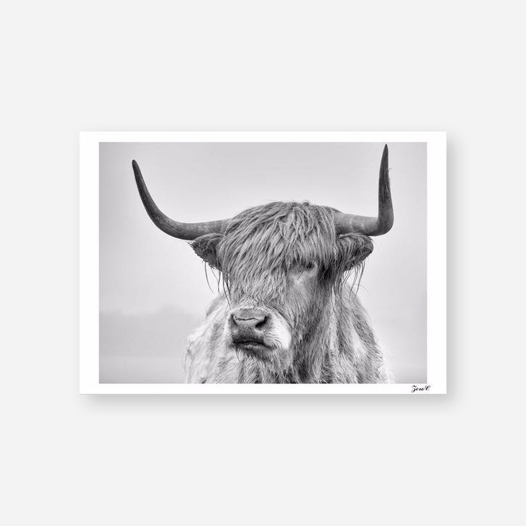 The Highland Cow Monochrome Canvas Print