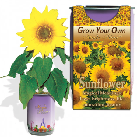 what does the sunflower represent, sunflower for mental health, sunflower growing can, sunflower in a can, sunflower garden in a can