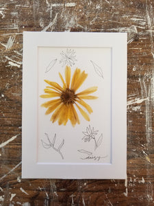 "April Birth Flower- Daisy- 5"" x 7"""