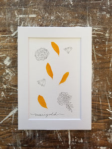 "October Birth Flower- Marigold- 5"" x 7"""