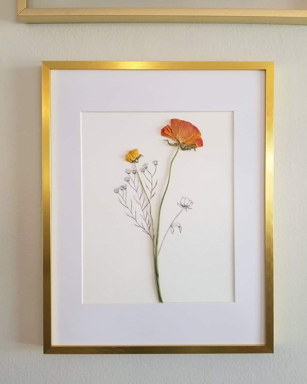 The Sketch Collection- Orange Ranunculus