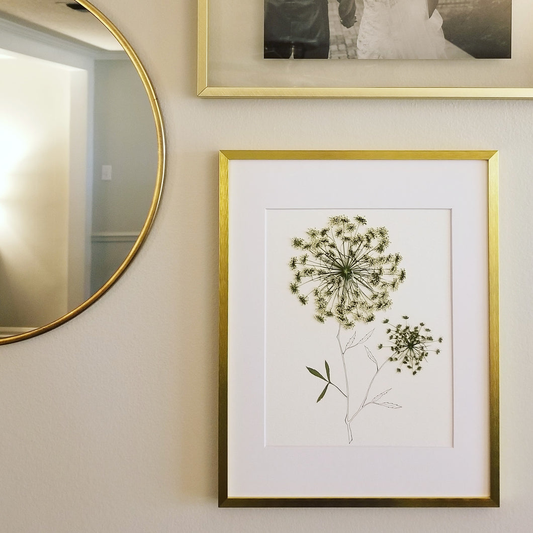 The Sketch Collection- Queen Anne's Lace - Original Only