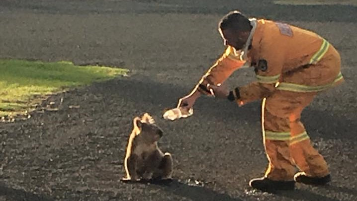 Firies Comfort Koala During Major Sydney Bushfire