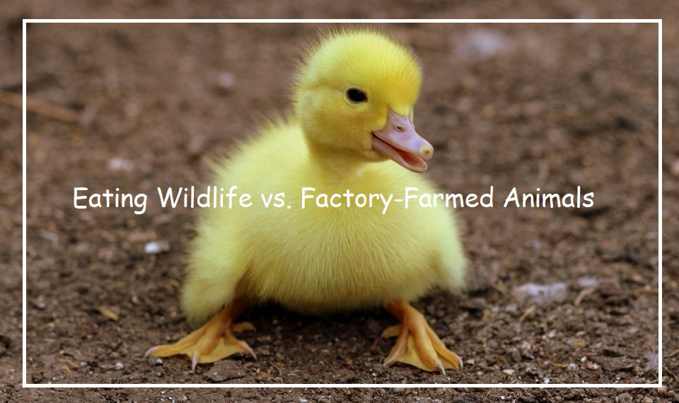 Eating Wildlife vs. Factory-Farmed Animals: Which One Poses The Greatest Threat To Public Health?