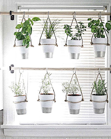 Pots with greenery as curtains!