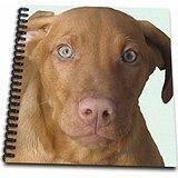 3dRose db_48744_1 Vizsla Puppy-Drawing Book, 8 by 8-Inch